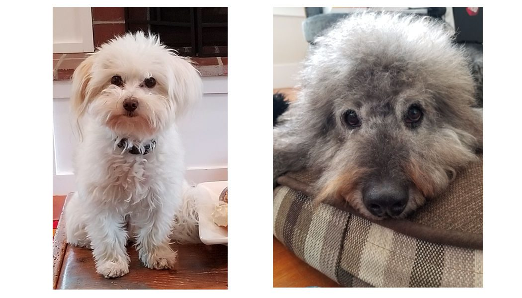 Dogs - Marsh and Mello